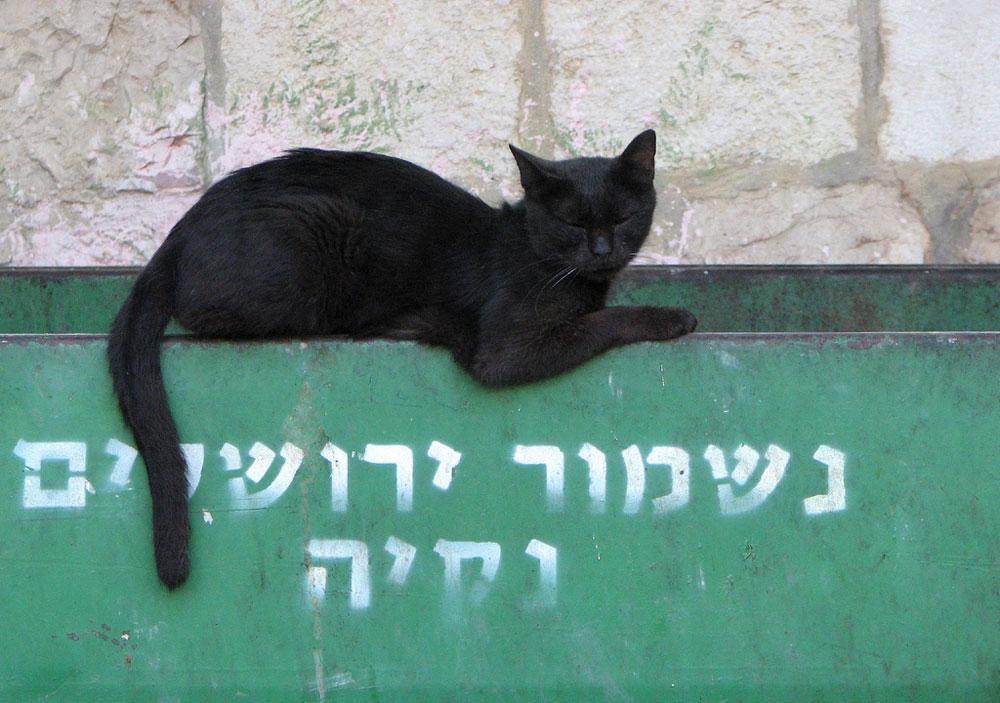 PI_GOLBE_ISRAEL_CO_008
