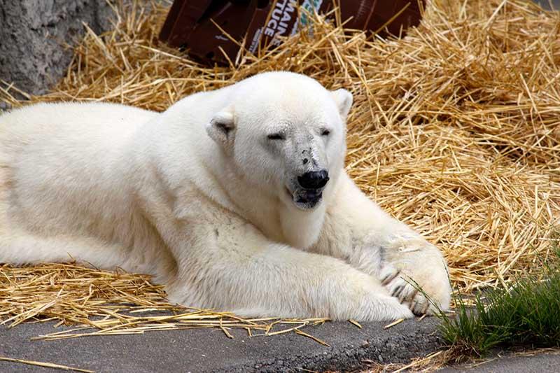 id_brunner_bears_ap_015